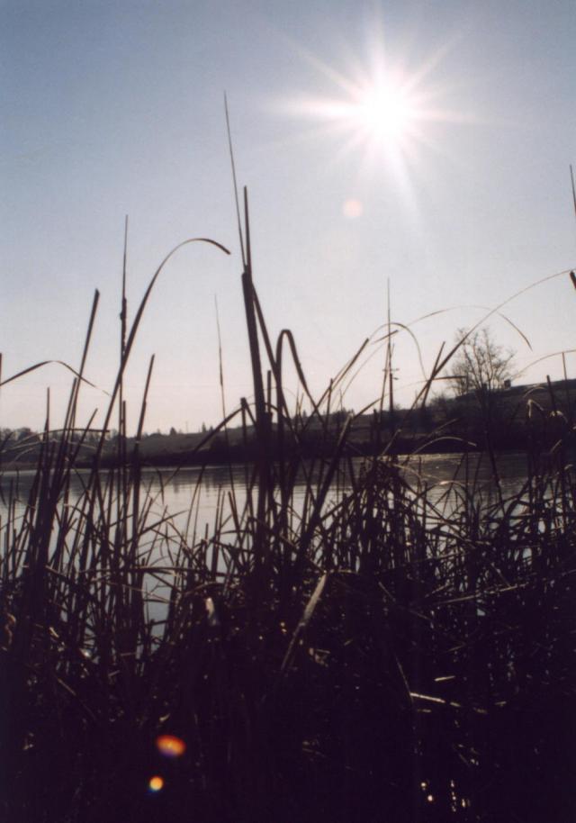 06 Rybník