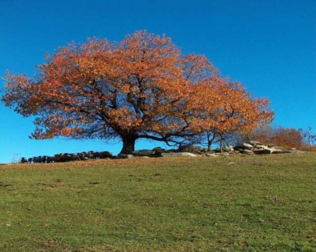 jeseň v Haferníku
