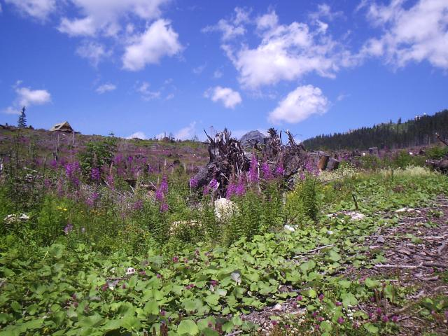 22 Krása pod Tatranskou magistrálou
