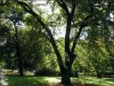 Mojm�rovce - 02 Park